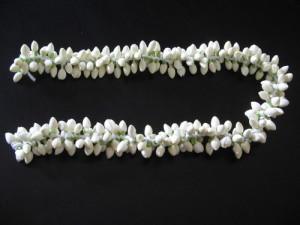 jasmine-flowers-500x500